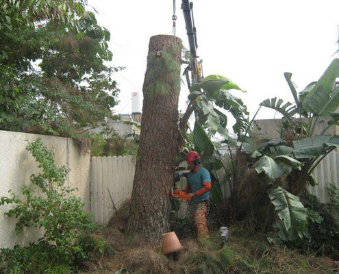 כריתת עצים בטיפוס והנפה עם מנוף - שי לעץ