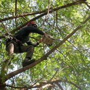 גיזום עצים בטיפוס