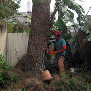 כריתת עצים שי לעץ