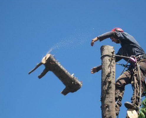 שי לעץ גיזום וכריתת עצים בטיפוס