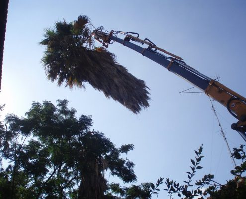 כריתת עצים בהנפה עם מנוף