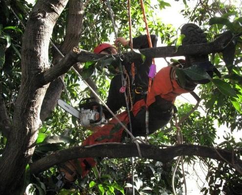 שי לעץ גיזום עצים בשרון